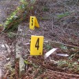 As a bit of fun I thought I would share a few video clips of the forensic process, often referred to as 'Crime Scene to Court'.   As a crime scene investigation I could...
